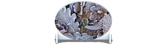 Fillers > Oval Filler > Winter Leaves