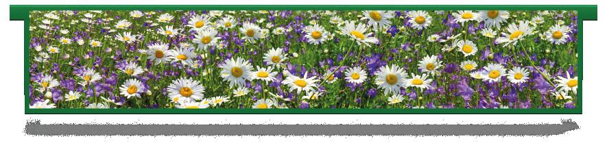Fillers > Hanging Solid Filler > Spring Meadow