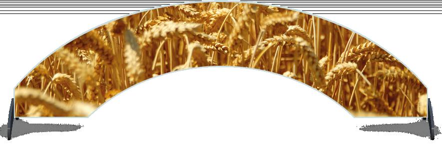 Fillers > Arch Filler > Wheat Field