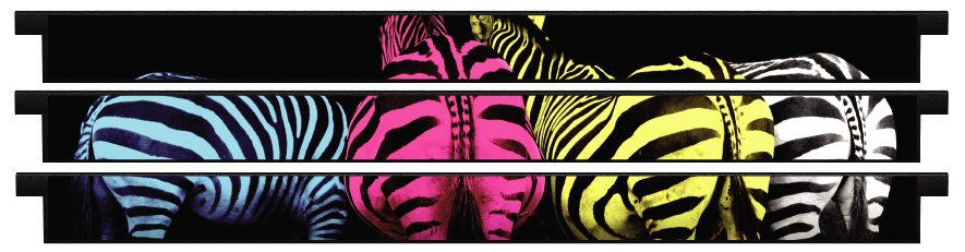 Planks > Straight Plank x 3 > Colourful Zebras