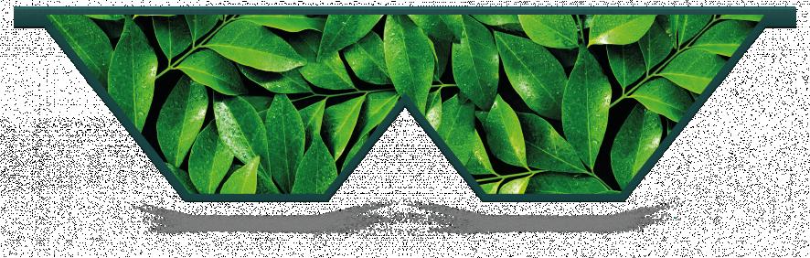 Fillers > Double V Filler > Spring Leaves