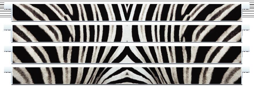 Planks > Straight Plank x 4 > Zebra Skin
