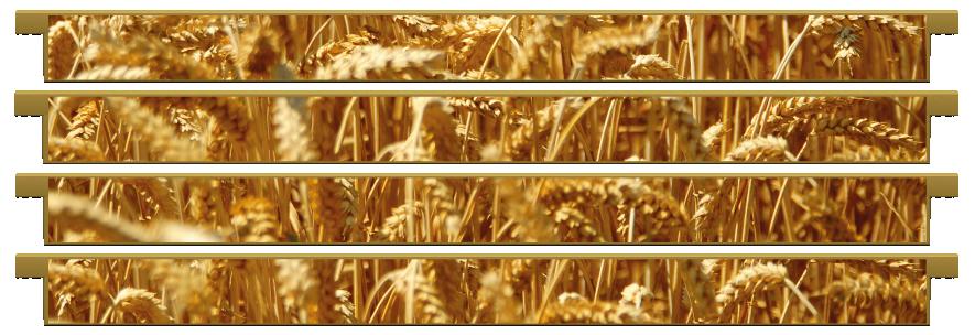 Planks > Straight Plank x 4 > Wheat Field
