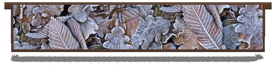 Fillers > Hanging Solid Filler > Winter Leaves