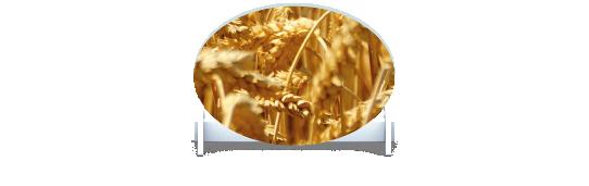 Fillers > Oval Filler > Wheat Field